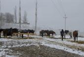 Второй конный. От Волгограда до Знаменска (часть I)